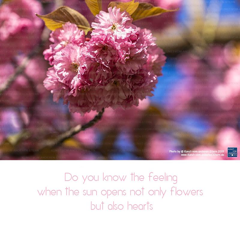 Kennst Du das Gefühl, wenn die Sonne nicht nur Blüten, sondern auch Herzen öffnet